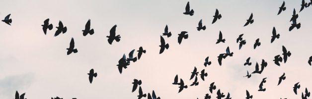 Liberación, pájaros y miedo